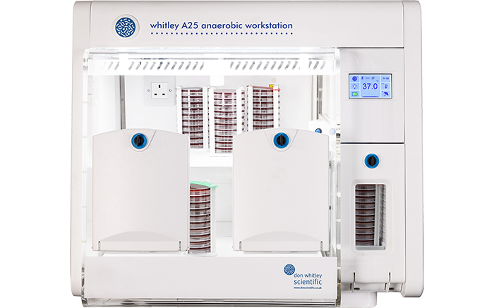Whitley A25 Workstation
